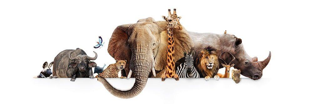 African Zoo Animals including lions, tigers, elephants, rhino and giraffe